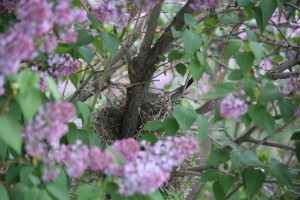A well camouflaged nest.