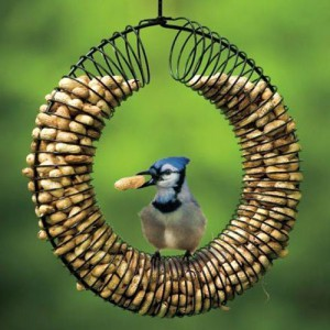This Blue Jay has found heaven in this Peanut feeder.