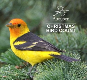 Christmas Bird Count photo