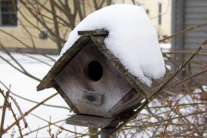 Birdhouses can shelter birds during winter nights