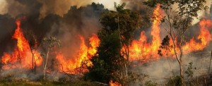 Fires in the Amazon, some intentional, some not are destroying critical bird habitat