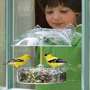 Feeding birds brings joy  and excitement to people of all ages.