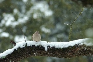 This Dove is just one of millions of birds impacted by the snow and ice in Texas